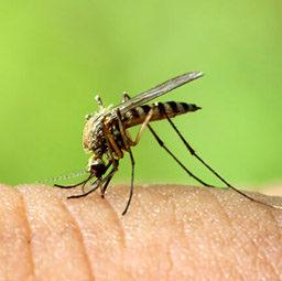 Уничтожение, выведение комаров